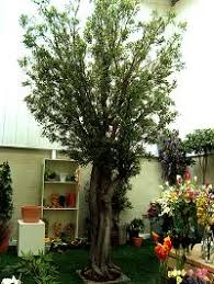 artificial palm tree manufacturers suppliers exporters in india