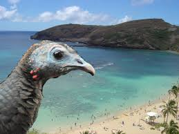 happy thanksgiving everyone from our turkey in hawaii