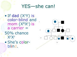 Can A Female Be Color Blind Linked Traits Genetic Counseling Sometimes It U0027s A Good Idea To