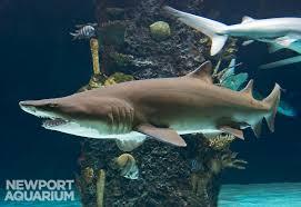 aquarium works news ideas adventures