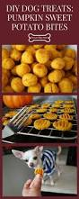 healthy thanksgiving tips diy dog treats pumpkin sweet potato bites perfect for