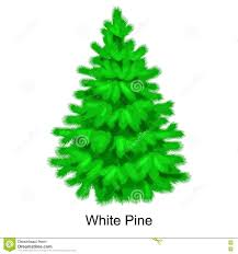christmas vector tree like white pine for new year celebration