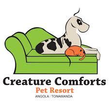 Creature Comforts Pet Sitting Western Ny U0027s Best Dog And Cat Boarding Dog Daycare Luxury Pet