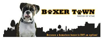 rescue a boxer dog boxer town rescue of utah home facebook