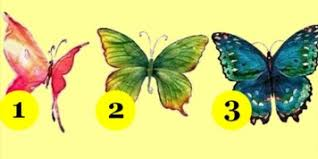 butterfly personality meaning edad estatura peso fotos