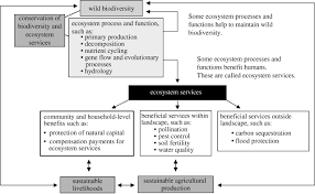 biodiversity conservation and agricultural sustainability towards