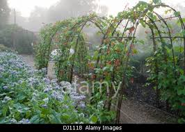 runner beans climbing over hazel arches beside bed of borage in