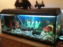 Home Design Games Big Fish by Fish Tank Home Aquarium Discus Fish Plants Free Tank Stirring