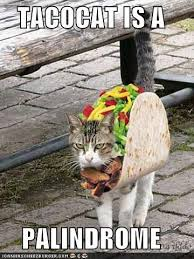 I Can Has Cheezburger Meme - 122 best i can has cheezburger images on pinterest funny animals