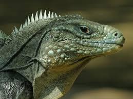 reptiles rock a rainforest reptiles show