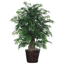 beachcrest home artificial potted ming aralia tree in pot
