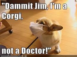 Dog Doctor Meme - dammit jim i m a corgi not a doctor dog bones corgi and corgis