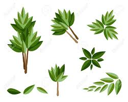 Tree Symbols An Illustration Collection Of Landscaping Tree Symbols Or