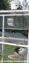 Rabbit Hutch Set Up Collection Pvc Building Plans Photos Best Image Libraries