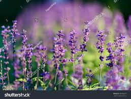 photos of flowers natural flower background amazing nature view stock photo