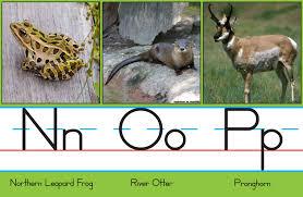colorado parks u0026 wildlife colorado wildlife u2014a to z