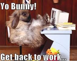 Back To Work Meme - 48 very funny bunnies meme pictures of all the time