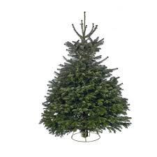 cut nordman fir real tree 7 8ft at homebase co uk