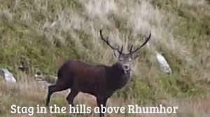 wildlife around loch goil youtube