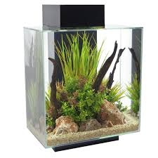 fluval edge 12 gallons aquarium with led light tuned fish tanks