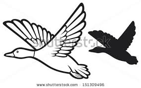 puddle duck stock images royalty free images u0026 vectors shutterstock