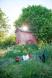 Backyard Chicken Raising by 1052 Best Chickens Images On Pinterest Chicken Coops Country