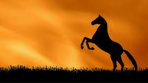 mustang horse silhouette horse pesade silhouette against a sunset sky motion background