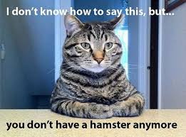 Animal Memes - funny animal memes part 3
