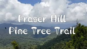 fraser u0027s hill pine tree trail 2016 youtube
