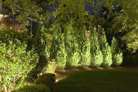 Outdoor Up Lighting For Trees Uplighting Trees Outdoor Space The Coastal Cottage Company
