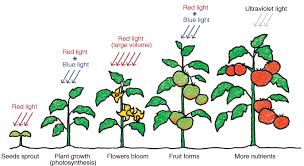 light and plant growth nurturing plants with light special contents all about light