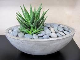 concrete succulent bowl succulents pinterest succulent bowls