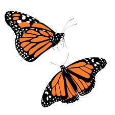 monarch butterfly free butterfly graphics images of butterflies