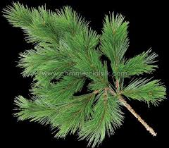 artificial pine foliage scotch pine 23