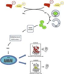 hemoglobin control of cell survival death decision regulates in
