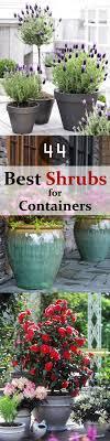 Garden Shrubs Ideas 44 Best Shrubs For Containers Best Container Gardening Plants