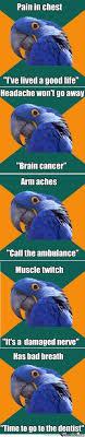 128 best paranoid parrot images on pinterest funny stuff ha ha
