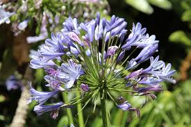 free photo botanical garden flowers free image on pixabay