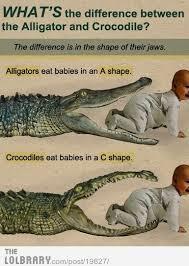 Interior Crocodile Alligator 92 Best Gators Gotta Go U0026 Crocs Too Images On Pinterest Crocs