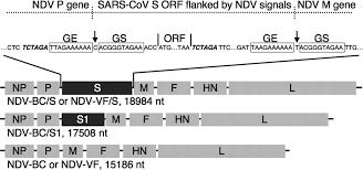 newcastle disease virus a host range restricted virus as a