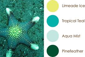 100 color shemes 8 beautiful color palettes for your next