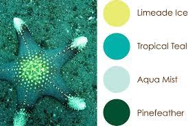 Colour Scheme by Tropical Color Schemes 125 Best Beach U0026 Tropical Color Schemes