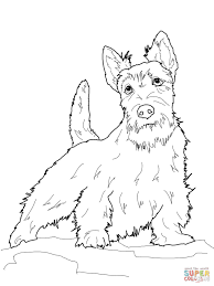 scottish terrier coloring page free printable coloring pages
