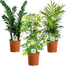 indoor plant mix 3 plants house office live potted pot plant tree