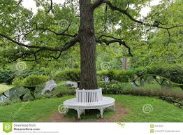bench around tree soappculture com