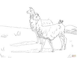 two llamas coloring page free printable coloring pages