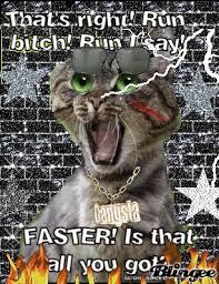 Run Bitch Run Meme - crazy cat picture 108493480 blingee com