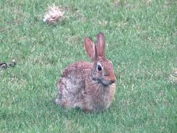 triyae com u003d wild backyard rabbits various design inspiration