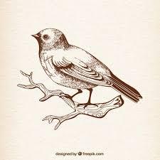 drawn bird pencil and in color drawn bird