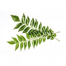 Curry Leaf Plant Diseases - curry leaves produce fresh please